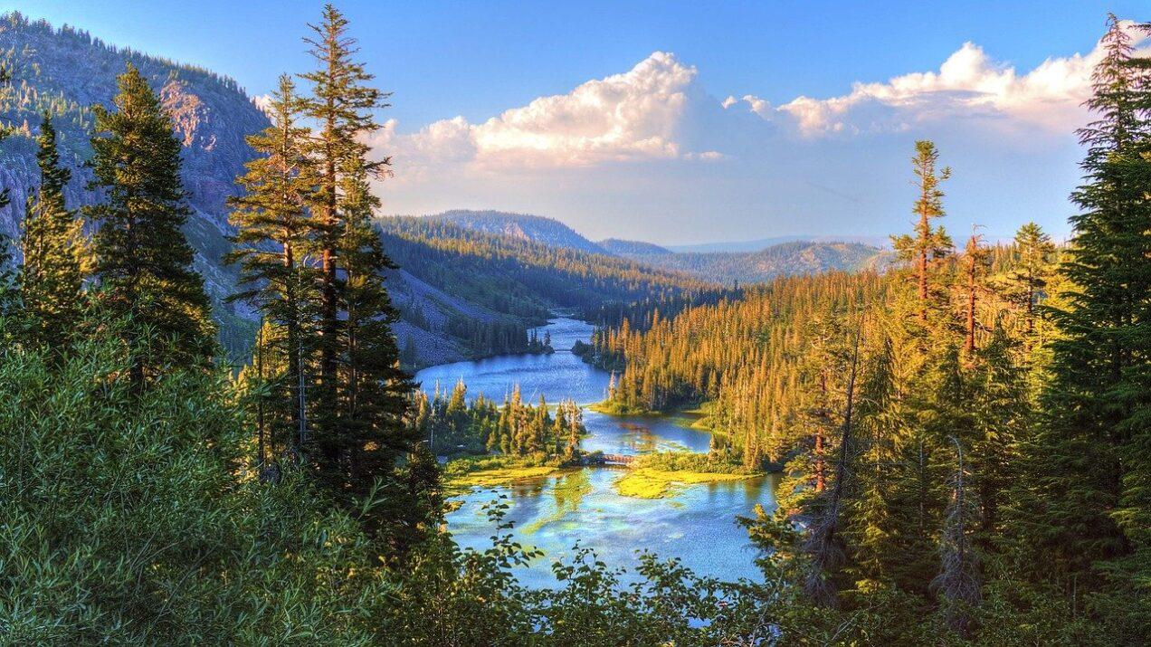 góry i las